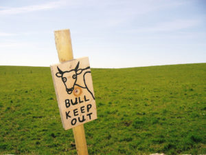 bull-keep-out-1390792-1280x960